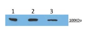 클릭하시면 닫힙니다.이미지 저장을 원하시면 마우스 오른쪽클릭후 '다른이름으로 저장'을 하세요